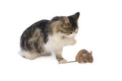 Mouse and cat. Isolated on white background Royalty Free Stock Images
