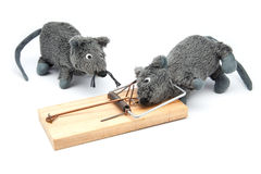 Mouse caught in mousetrap Stock Image
