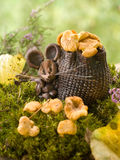 Mouse with chanterelles Stock Images