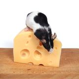 Mouse and cheese stock photo
