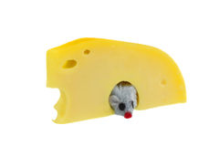 Mouse in cheese Royalty Free Stock Photos