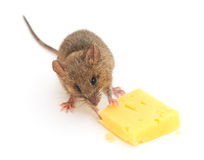 Mouse and cheese Royalty Free Stock Photography