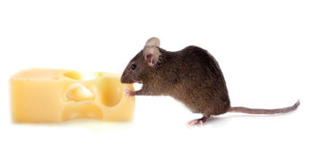 Mouse and cheese Royalty Free Stock Images
