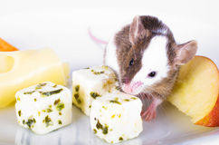 Mouse on a Cheese Plate Stock Images
