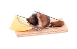 Mouse and cheese in tap Royalty Free Stock Photos