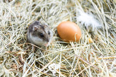 Mouse with chicken eggs on hay. Village composition. royalty free stock photos