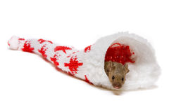 Mouse in christmas hat Royalty Free Stock Photo
