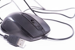Mouse. Stock Image
