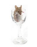 Mouse in a crystal glass Stock Images