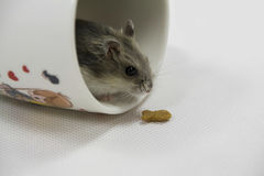 Mouse in cup Stock Photography