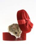 Mouse dal contenitore di regalo Immagini Stock