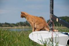 Mouse di caccia del gatto Fotografia Stock