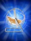 Mouse di energia sulla rotella Fotografie Stock