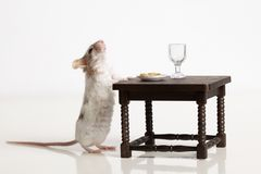 Mouse dines at the table Royalty Free Stock Photography