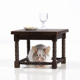 Mouse dines at the table Stock Photo