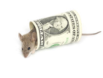Mouse and the dollar Royalty Free Stock Image