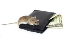 Mouse and the dollar Stock Photography
