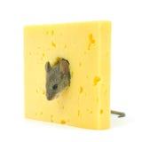 Mouse e formaggio Fotografie Stock