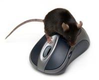 Mouse e mouse Fotografia Stock