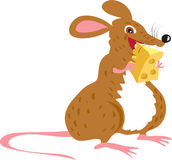 Mouse eating cheese. A cartoon fat mouse eating a large lump of swiss cheese Stock Photo