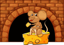 Mouse eating cheese in the house Royalty Free Stock Photo
