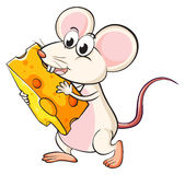 A mouse eating cheese Royalty Free Stock Photo