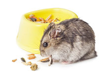 Mouse eating grain isolated Stock Photography