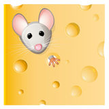 A mouse eating a piece of cheese. A mouse eating a delicious piece of cheese stock illustration