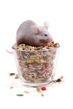 Mouse eating seeds stock images