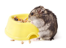 Mouse eating from yellow bowl Royalty Free Stock Images