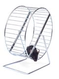 Mouse on an exercise wheel Stock Images
