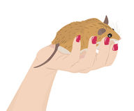 Mouse in a female hand Stock Photos
