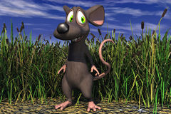 A Mouse In Field Stock Images