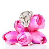 Mouse on flowers. Mouse standing on tullip bouquet royalty free stock photo
