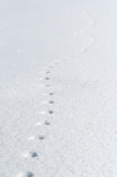 Mouse footprints Royalty Free Stock Photos