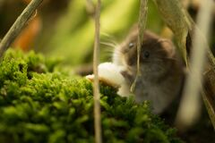 Mouse in forest Stock Images