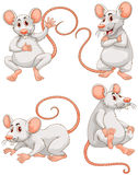 Mouse in four different actions Royalty Free Stock Images