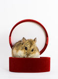 Mouse-gift Royalty Free Stock Photo