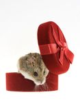 Mouse from the gift box Stock Images