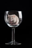 Mouse in glass Royalty Free Stock Photo