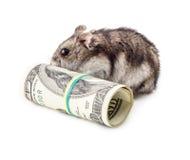 Mouse gnaws money Royalty Free Stock Photos
