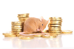Mouse with golden coins. Mouse sitting on golden coins stock image