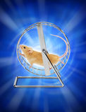Mouse Hamster Exercise Wheel. A mouse running on an exercise wheel with a blue futuristic background Stock Photos
