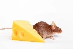 Mouse happiness Royalty Free Stock Photos