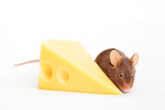 Mouse happiness Stock Photos