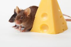 Mouse happiness Stock Photo