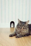 Mouse in the hole and cat. Mouse peeking out his hole and beautiful cat waiting outside lying on the floor Royalty Free Stock Image