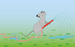 Mouse with a hose watering lawn Stock Images