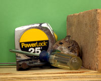 Mouse in the House Stock Image