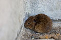 Mouse in a house corner royalty free stock photo